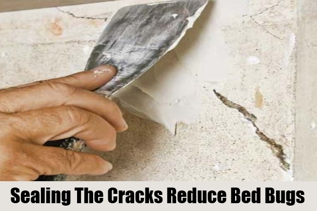 Sealing The Cracks Reduce Bed Bugs