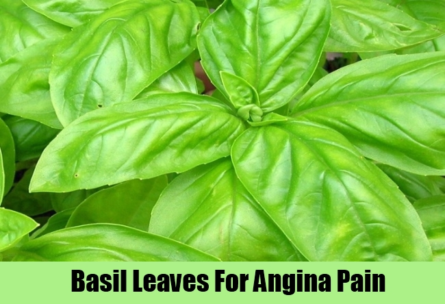 Basil Leaves For Angina Pain