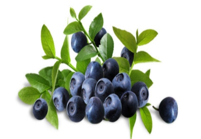 Bilberry For Macular Degeneration