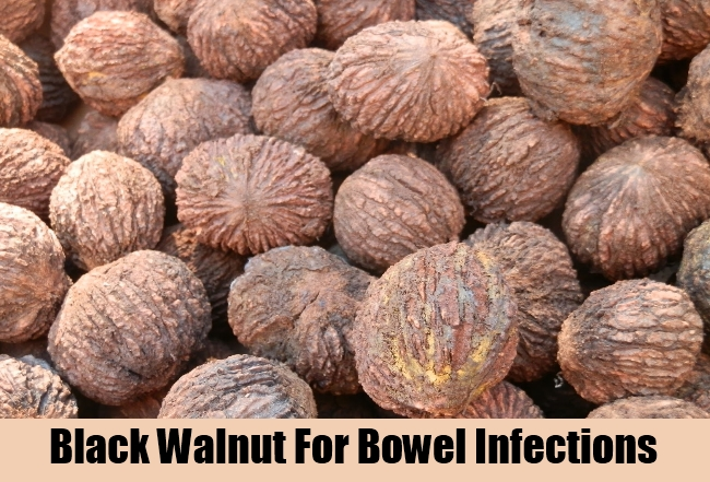 Black Walnut For Bowel Infections