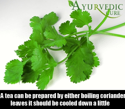 Coriander Leaves Or Seeds Effects