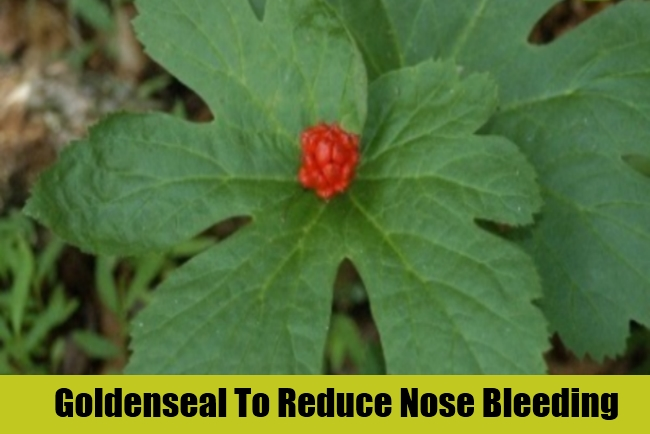 how to stop bleeding naturally