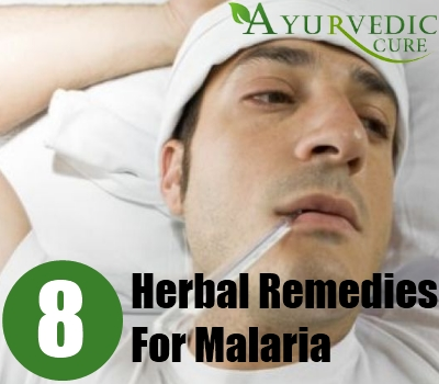 Herbal Remedies For Malaria