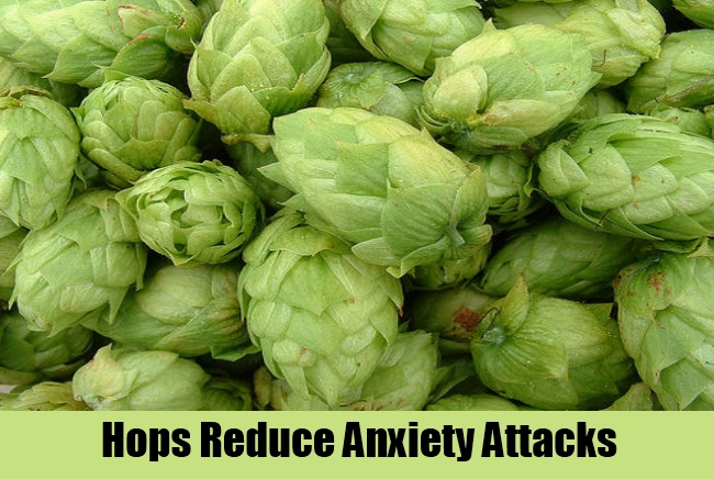 Hops Reduce Anxiety Attacks