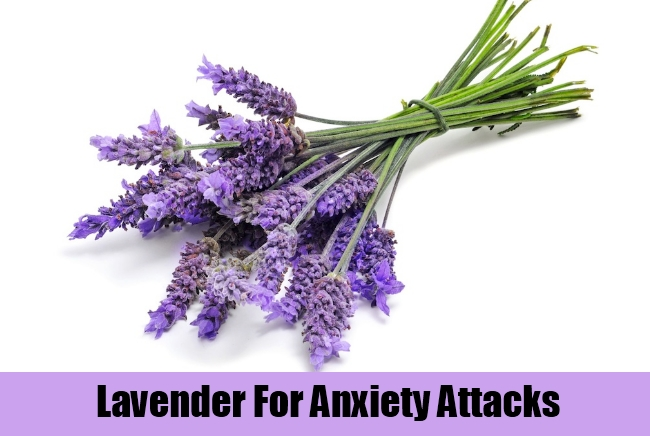 Lavender For Anxiety Attacks