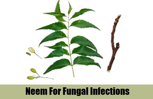 Neem For Fungal Infections