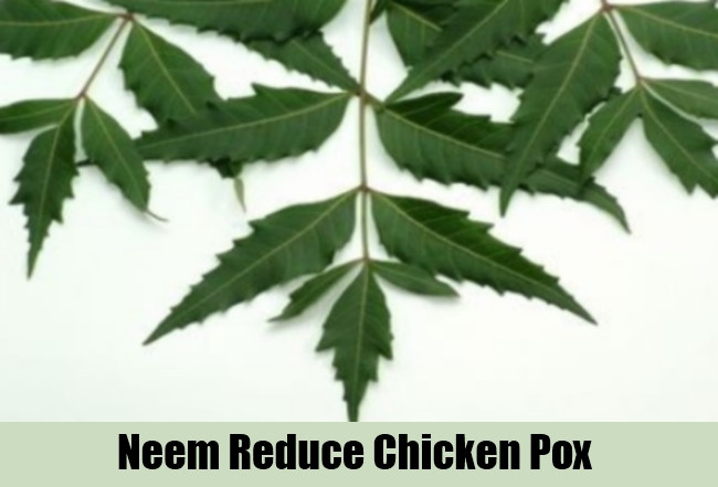 Neem Reduce Chicken Pox