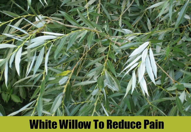 White Willow To Reduce Pain