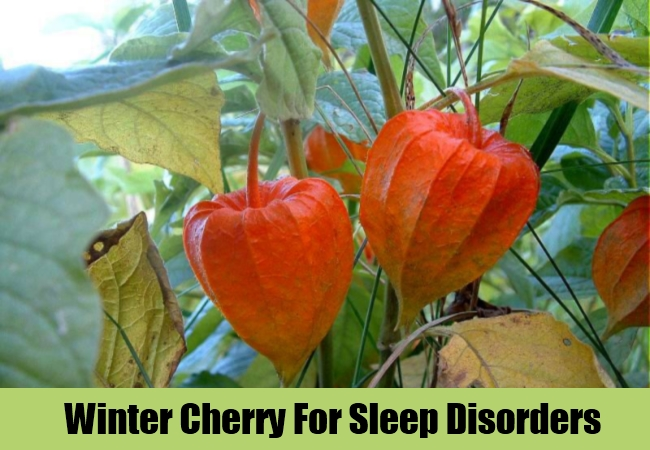 Winter Cherry For Sleep Disorders