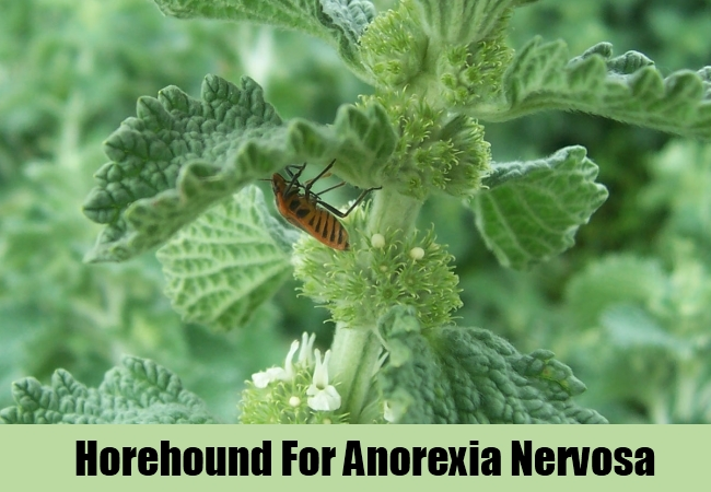 Horehound For Anorexia Nervosa