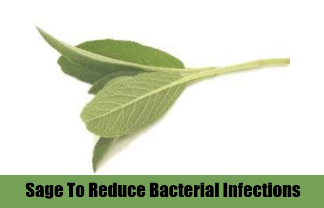 Sage To Reduce Bacterial Infections