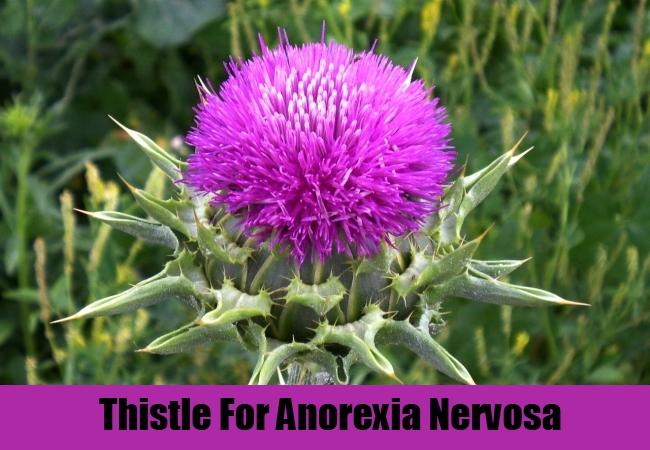 Thistle For Anorexia Nervosa