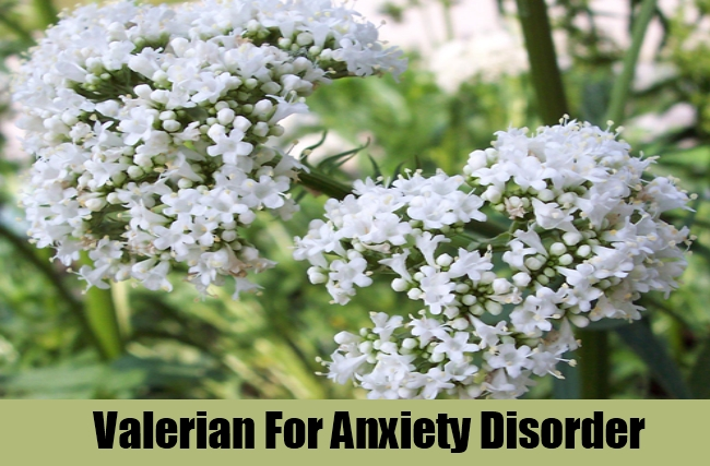 Valerian For Anxiety Disorder