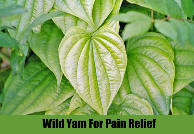 Wild Yam For Pain Relief