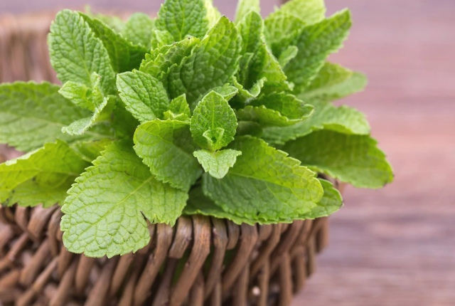 Take Mint For Controlling Asthma