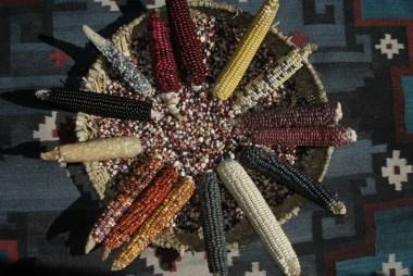 IMG_ 0277 Corn varieties