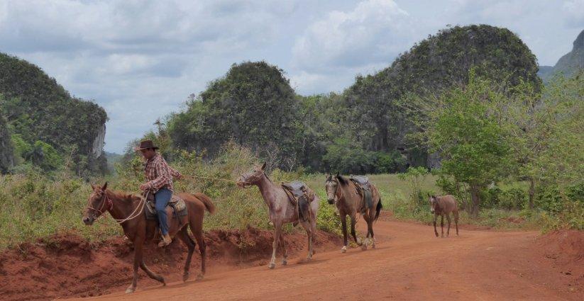 Cubaanse Cowboy....uh horseboy. Viñales