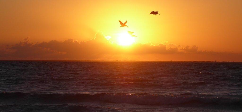 Pelikanen op jacht in het licht van de ondergaande zon. Isla Mujeres
