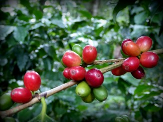 """Ooooh koffie!!! Bio-Parque y Finca de Cafe y Flores """"Paradise"""""""
