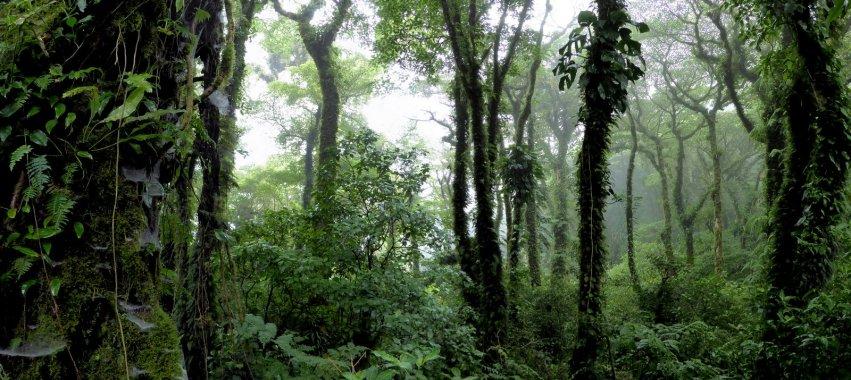 Bomen. Vulkaan Maderas