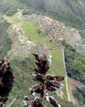Vogel gespot! Of was het Machu Picchu?!
