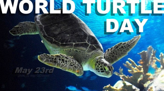 WORLD TURTLE DAY ~ 23rd May