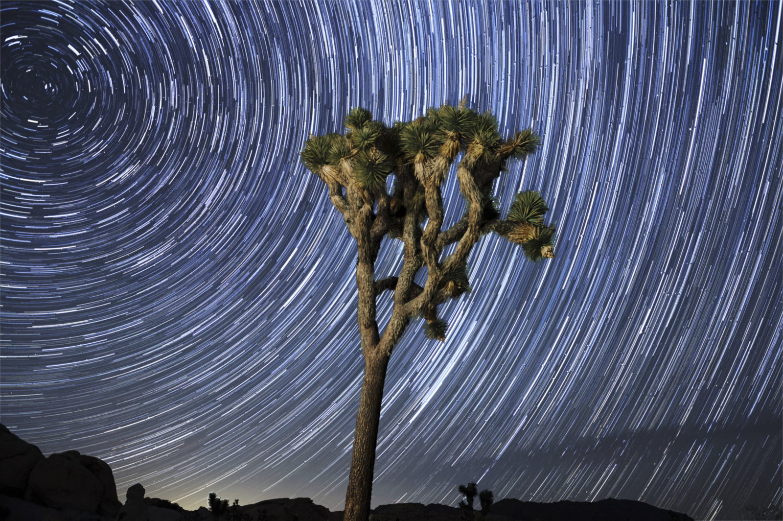 Joshua Tree - Star Trail Photography Workshop in Austin Texas