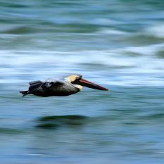 Padre Island Photo Workshop - Landscape - Birds - Astrophotography - 003