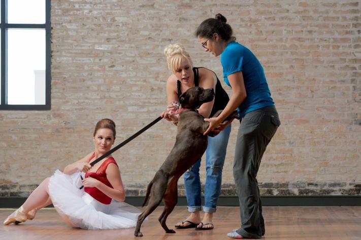 Volunteer Photography - Ballet Dog Photos