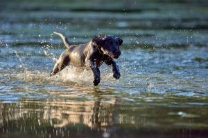 Puppy running in water - slightly back focused - Why isn't my photo in focus?