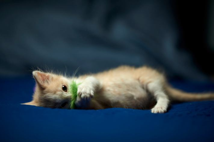 A cute kitten playing with a blue fuzzy toy on a bed.