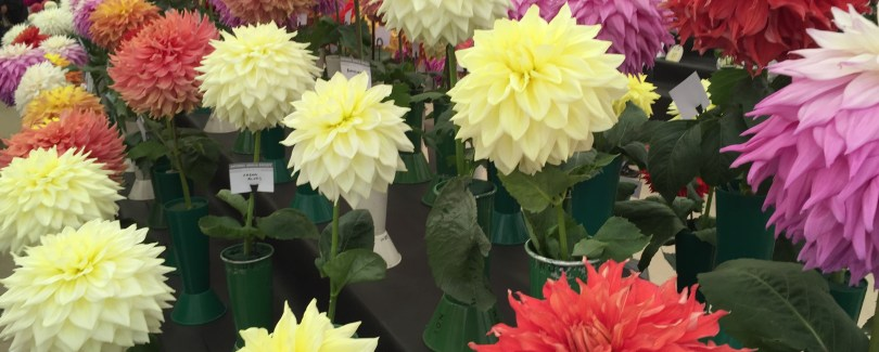 BMCB Harrogate Flower Show Sep 2015