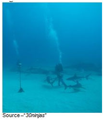 Underwater Adventure – We admit it, diving into waters where you know there are going to be sharks isn't for everyone. Smithingham's shark adventure gives people an up close and personal experience of almost interacting with sharks without getting wet.