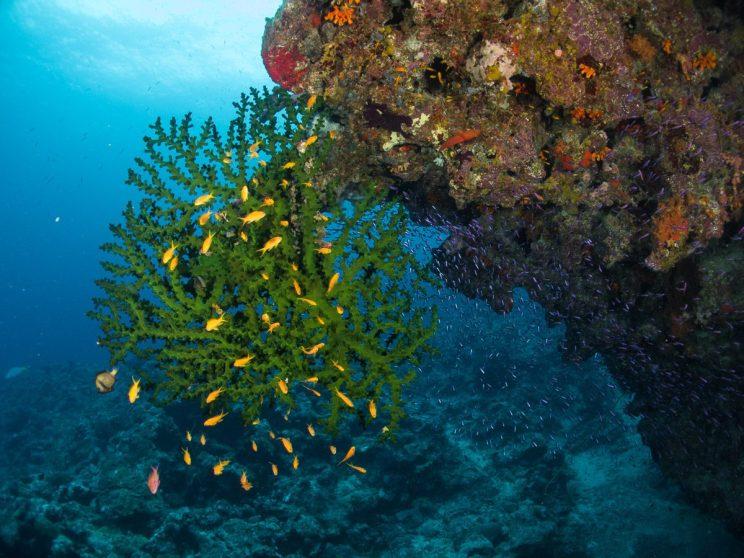 ambiance corail-hienghene