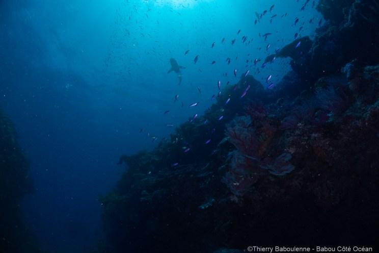 Plongée à Hienghène Nouvelle calédonie avec babou Côté Océan. Photo Thierry Baboulenne