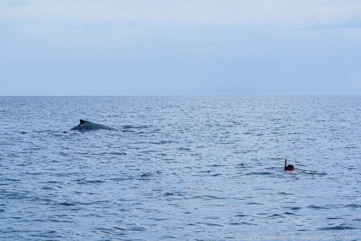 Baleine à Hienghene - Nouvelle Calédonie - Babou Plongée