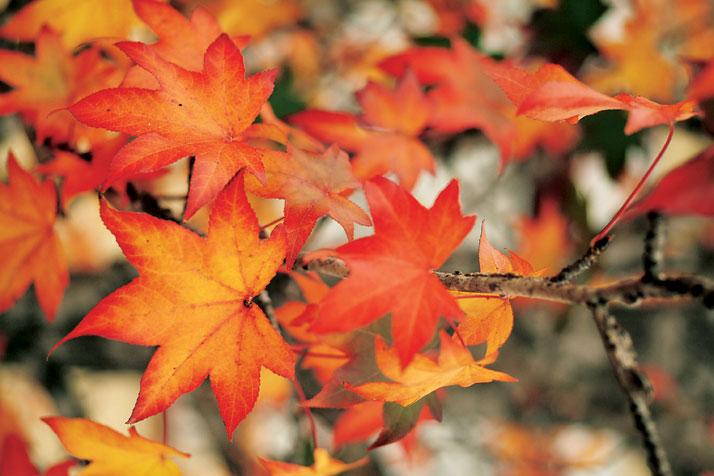 Mijn grote 'herfst- en winterfrustratie'