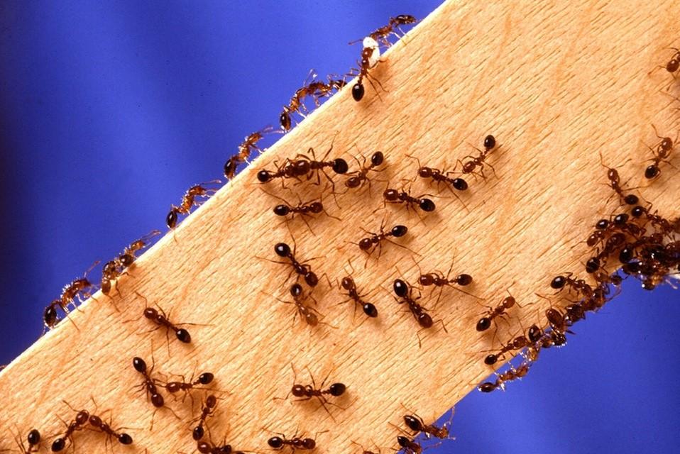 Zo kom je van de mieren af