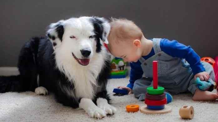 10 razze di cani per bambini piccoli e neonati - collie