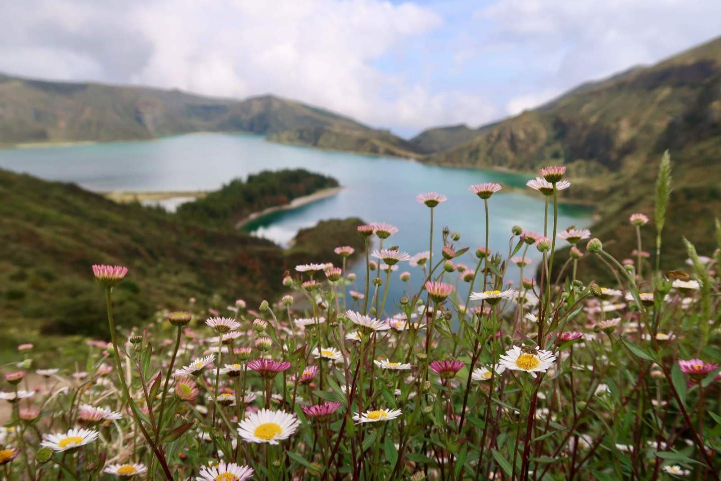 azores portugal flowers lake nature