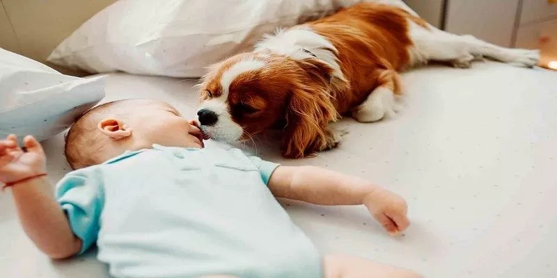 Introduce Your Dog To Your Baby – What You Must Know?