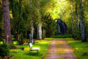 lush green park with bench