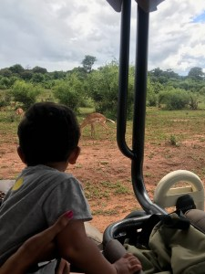 Aarav watching an impala on safari in Africa