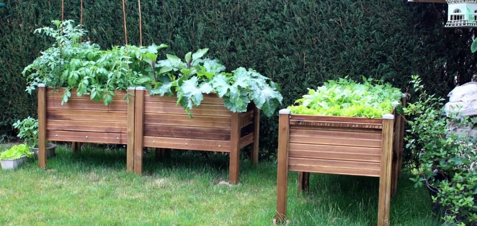 Carré potager jardiner à hauteur Papycool-cultiver chez soi