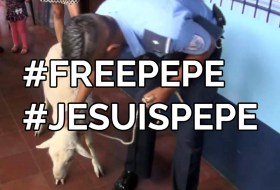 Policía de Nicaragua, liberen a Pepe o van a ver #FreePepe #JeSuisPepe