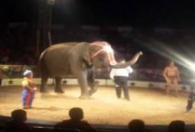 A una semana de la muerte de la Elefante Samba, el Circo de Renato va de viaje