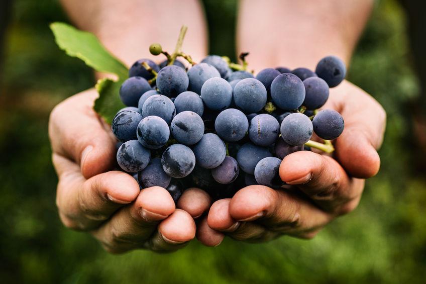 Passione per il lavoro - Baccicchetto vini