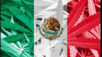Mexico HIGH Court Mandates Recreational Use of Marijuana Legal After Country Fumbles Law