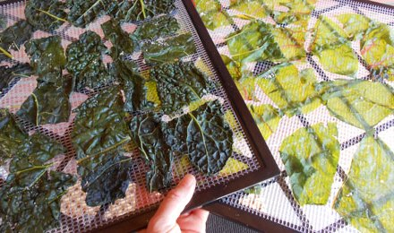 Simple Kale and Chard Chips