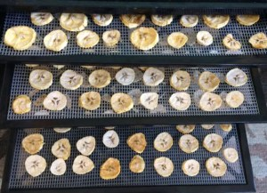 plantain chips laid out on dehydrator trays
